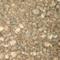 Mini thumb 9b867a1594ecb348